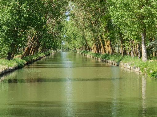 Canal de Castilla, Medina de Rioseco y Villa del Libro, Urueña