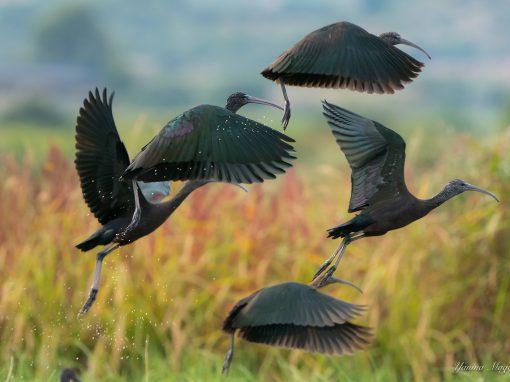 Descubre las aves y biodiversidad de la Marjal dels Moros