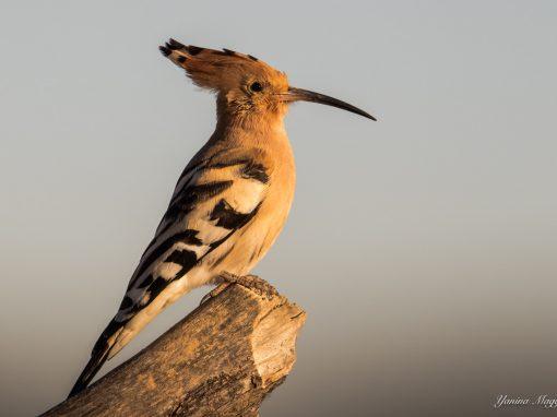 Descubre las aves y biodiversidad de Ribarroja del Turia