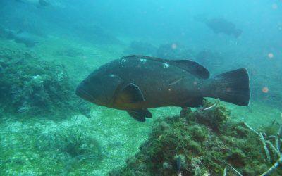 Inmersión en Reserva Marina Isla Tabarca
