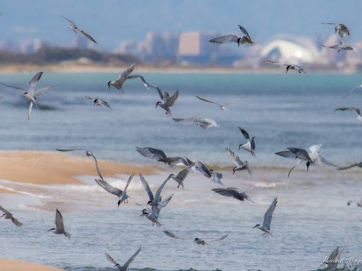 Descubre las aves y la historia del Parque Natural de l'Albufera